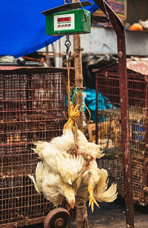 Безкоштовне стокове фото на тему «жорстокий, невагомий, птах на дроті х, ринок»
