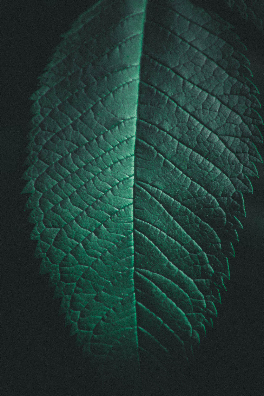 Foto profissional grátis de abstrair, aumento, biologia, cor