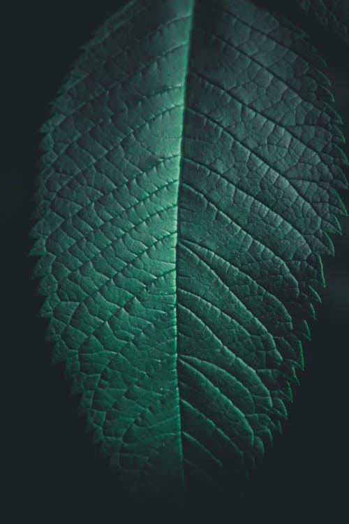การเจริญเติบโต, ชีววิทยา, ธรรมชาติ