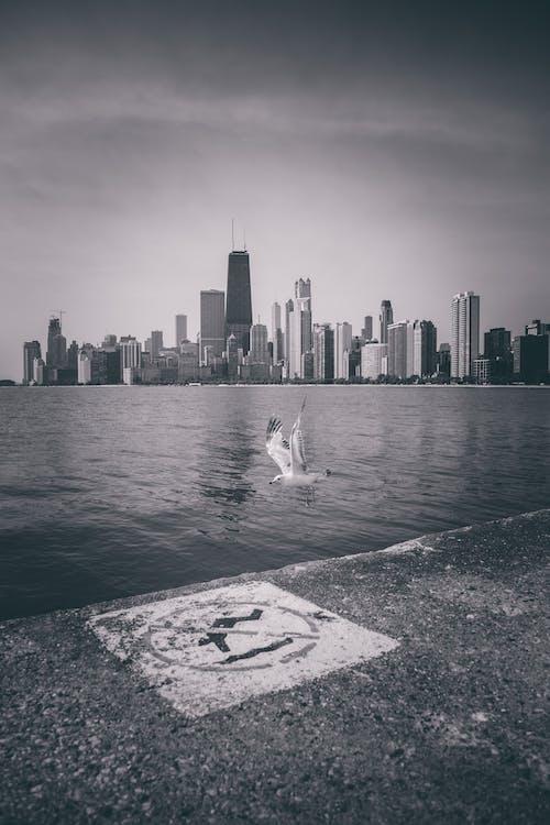 Imagine de stoc gratuită din alb-negru, arhitectură, centrul orașului