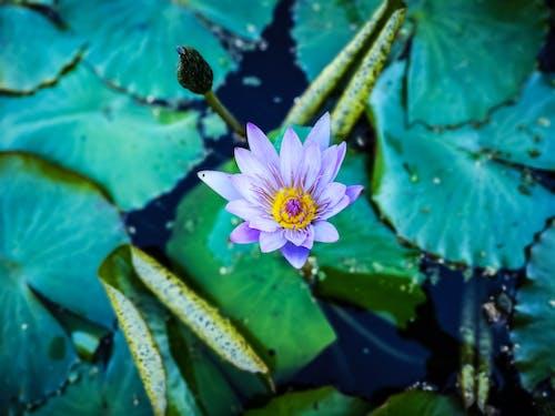 Ingyenes stockfotó 4k, élet, gyönyörű virág, gyönyörű virágok témában