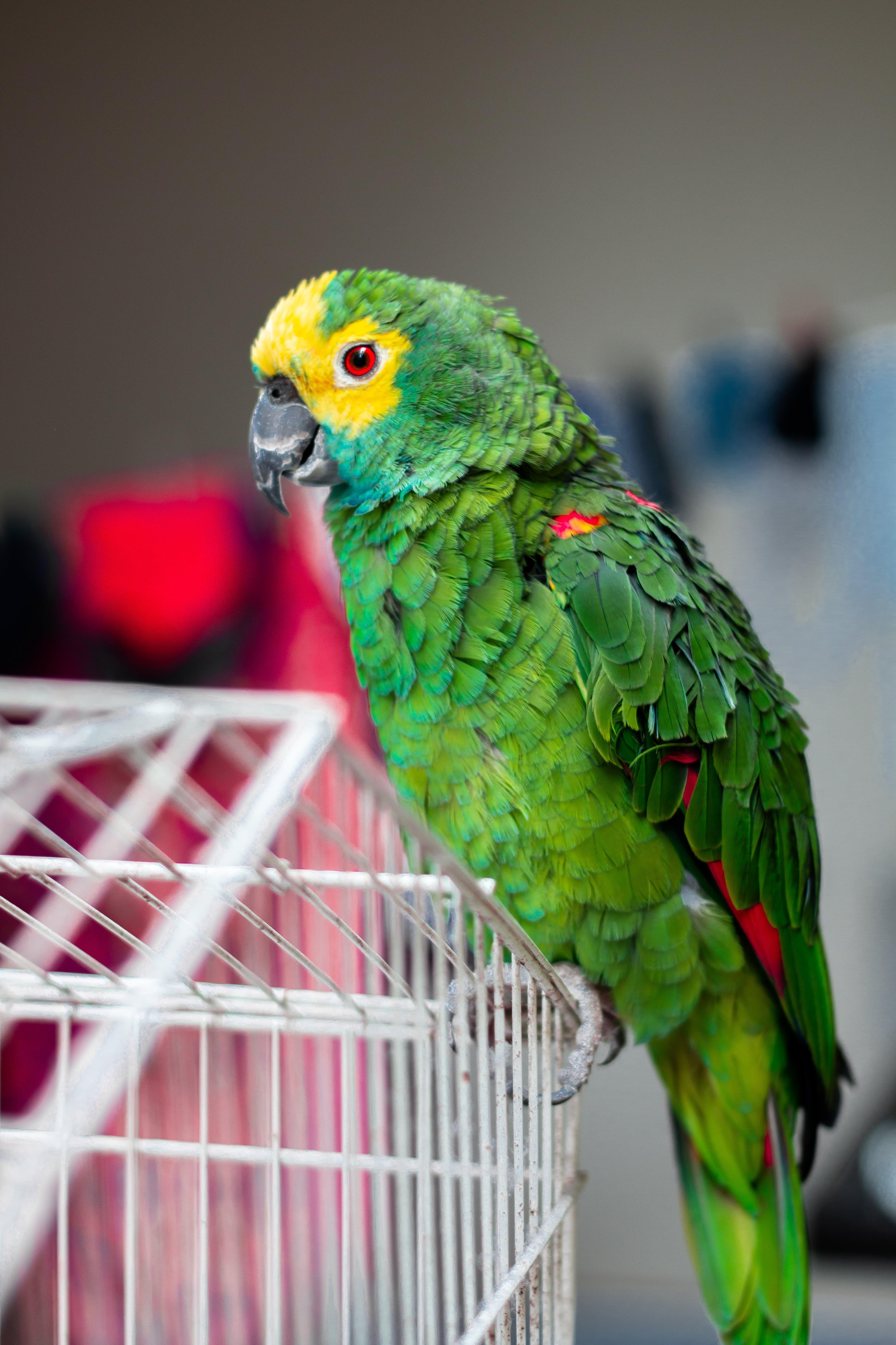 Foto profissional grátis de animal de estimação, atraente, ave, aviário