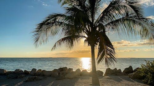 日落, 海洋, 落日下的海滩, 蓝色的海洋 的 免费素材照片