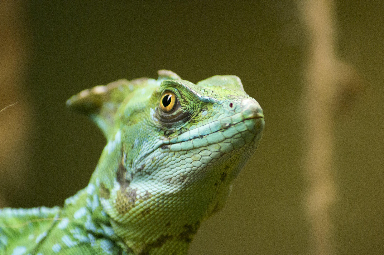 Fotos de stock gratuitas de al aire libre, animal, balanzas, color