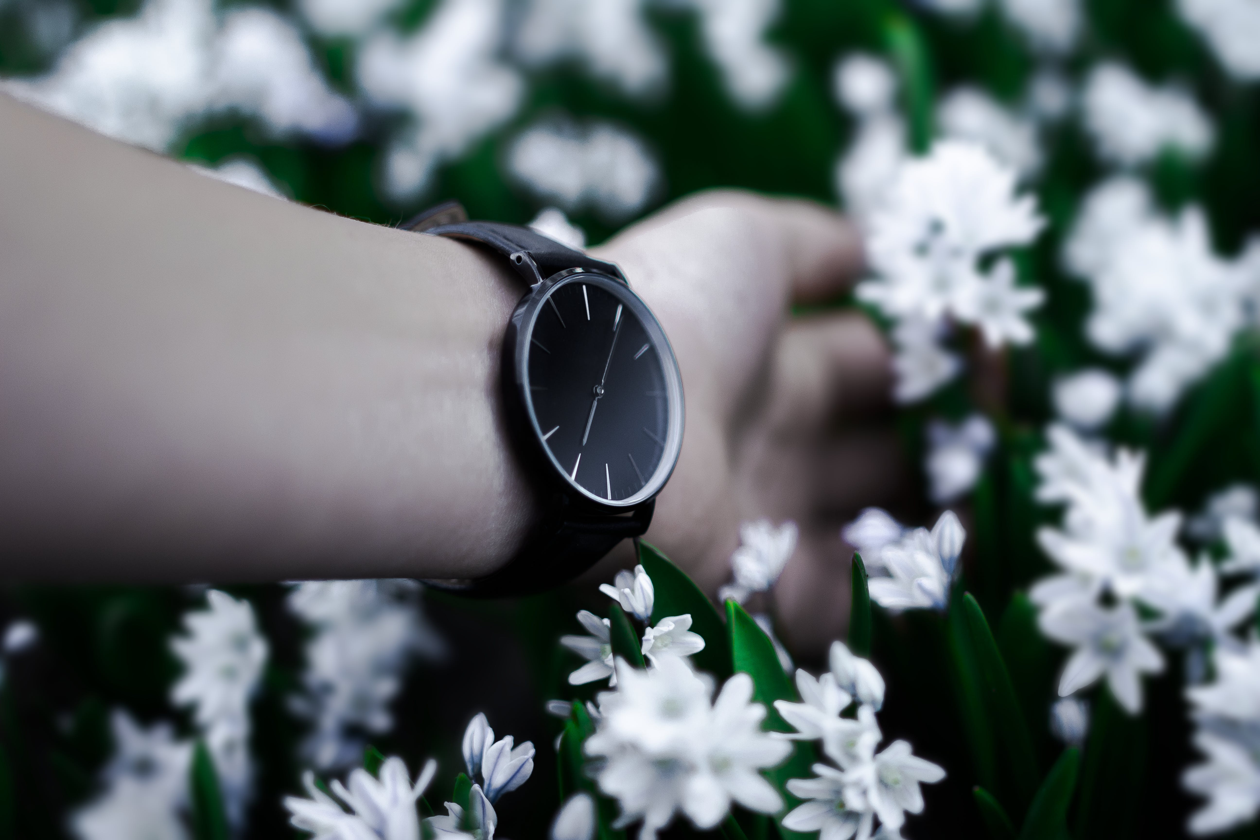 Person in Black Analog Watch Holding White Flowers