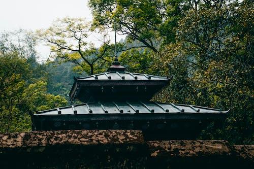 Imagine de stoc gratuită din acoperișuri, arbori, cadru, cer