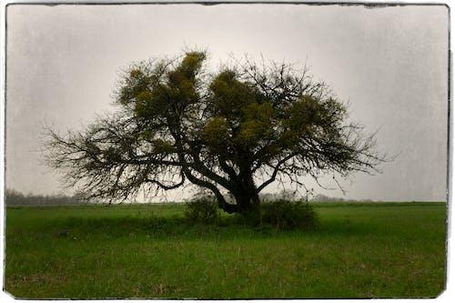 Free stock photo of lonely tree, sad tree, single tree, tree