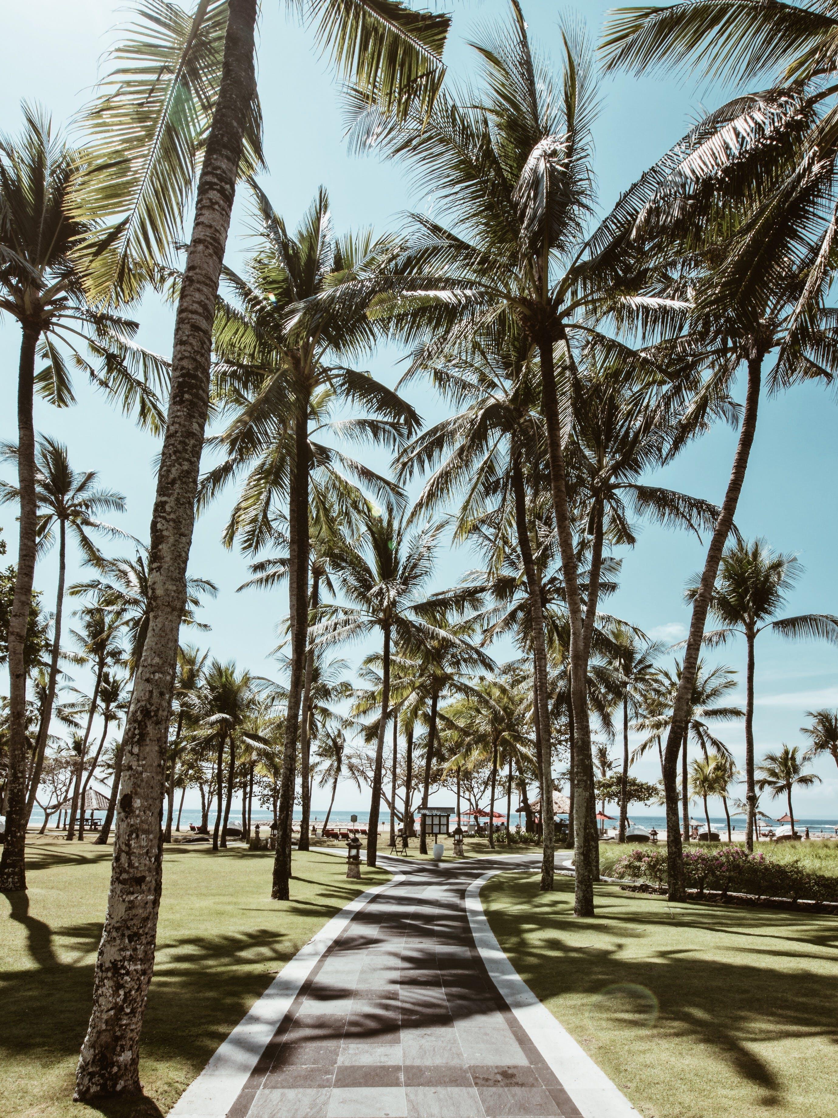Foto stok gratis jalan, pepohonan palem, pohon, pohon kelapa