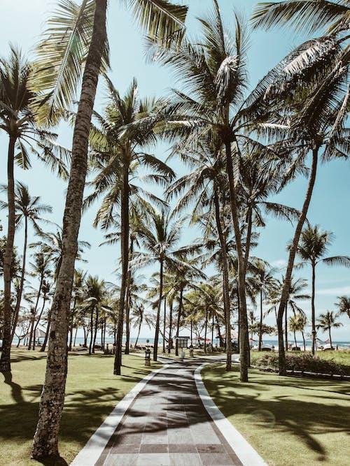 Gratis lagerfoto af feriested, kokostræer, palmer, sti