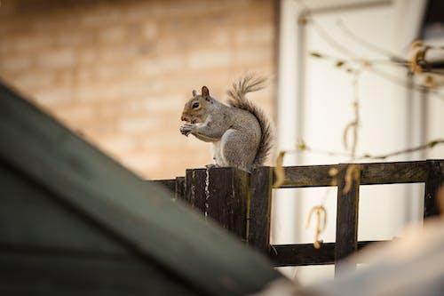 Fotobanka sbezplatnými fotkami na tému cicavec, hlodavec, pruhovaná veverica, srsť