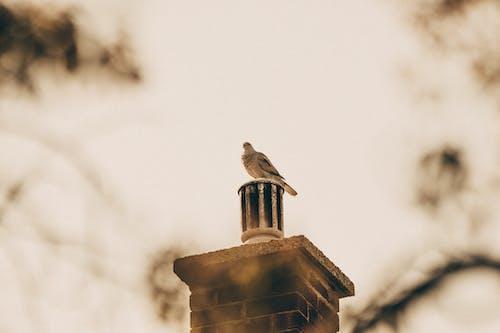 Ilmainen kuvapankkikuva tunnisteilla Betoni, efekti, kyyhöttävä, lintu