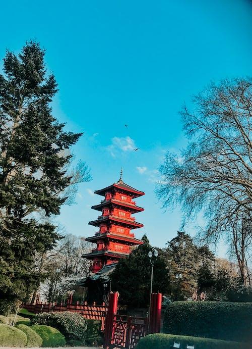Бесплатное стоковое фото с Азиатская архитектура, архитектура, ворота, деревья