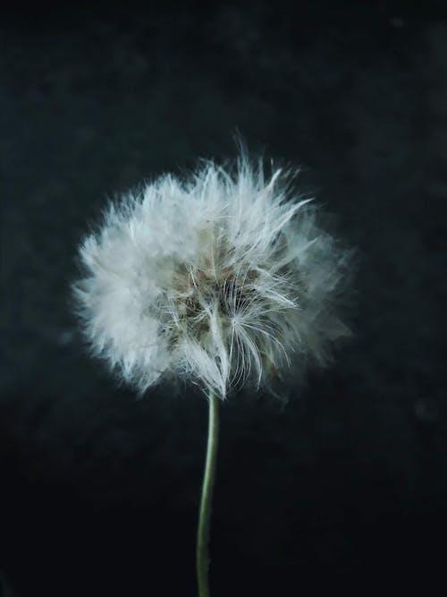 alan derinliği, beyaz, bitki, bitki örtüsü içeren Ücretsiz stok fotoğraf