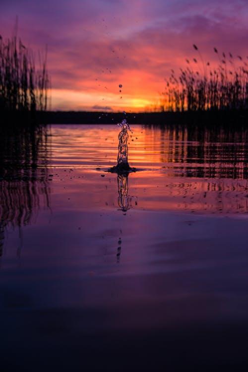 Ingyenes stockfotó alkonyat, arany horizont, este, fókusz témában