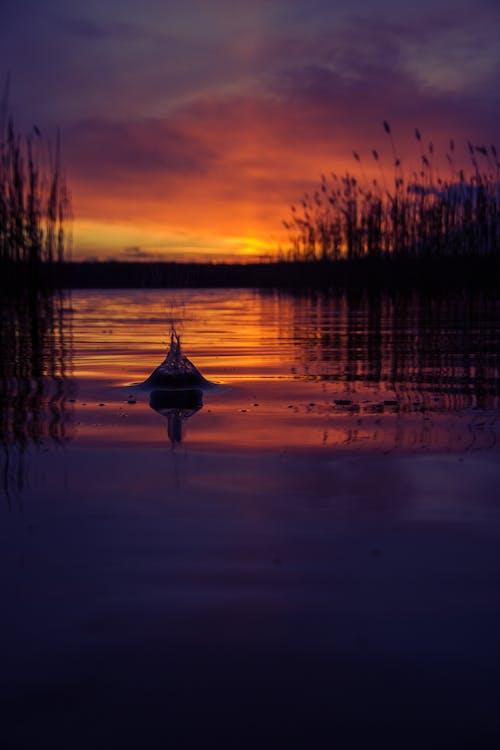 Ingyenes stockfotó arany horizont, erdő, esti nap, felhők témában