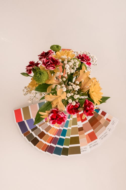 Brown and Red Petaled Flowers Near Color Palettes