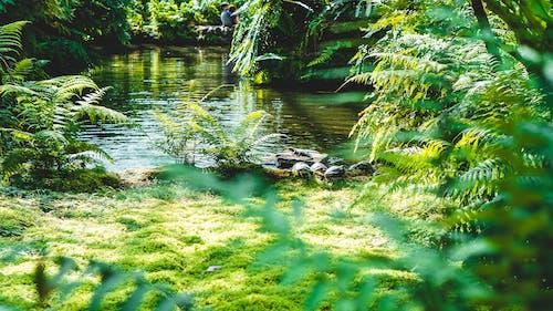 가벼운, 강, 경치, 계절의 무료 스톡 사진
