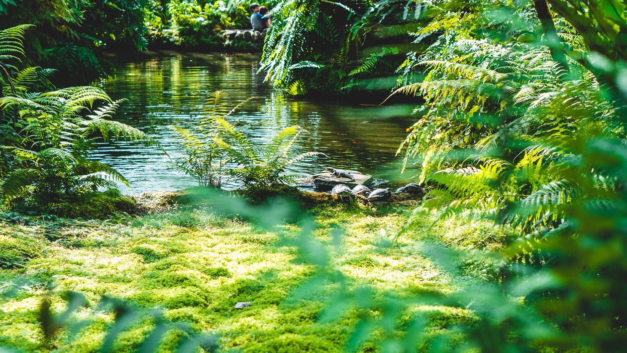 Green Ferns Near Body of Water
