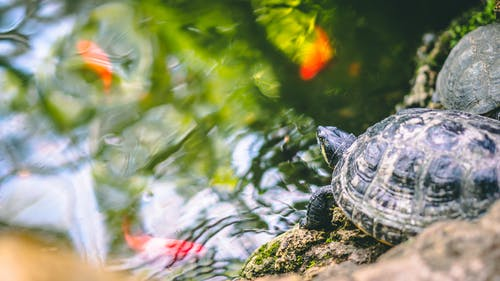 Selective Focus Photography of a Turtle