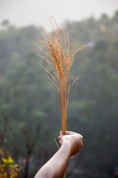 Gratis stockfoto met bergen, blurry achtergrond, bomen, buiten
