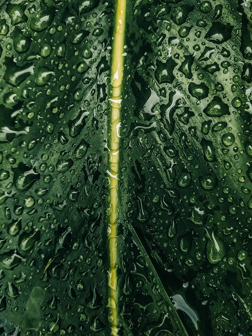 Kostenloses Stock Foto zu blatt, mobilechallenge, nahansicht, nass