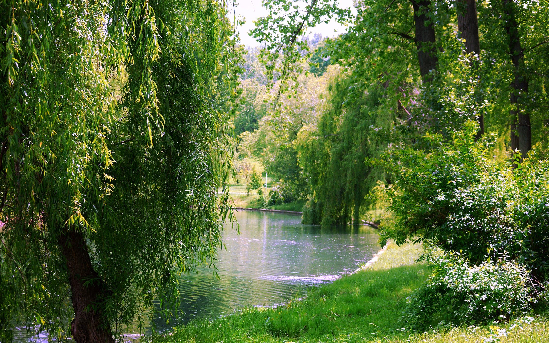 คลังภาพถ่ายฟรี ของ ต้นหลิว, ต้นไม้, ทะเลสาป, ธรรมชาติ