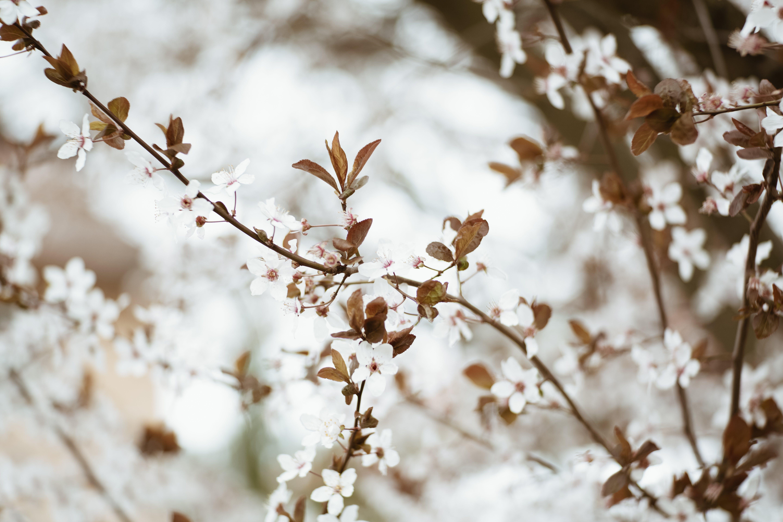 Ảnh lưu trữ miễn phí về cánh hoa, cây, chi nhánh, hệ thực vật