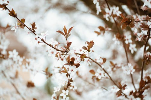 Free stock photo of bloom, blossom, branch, flora