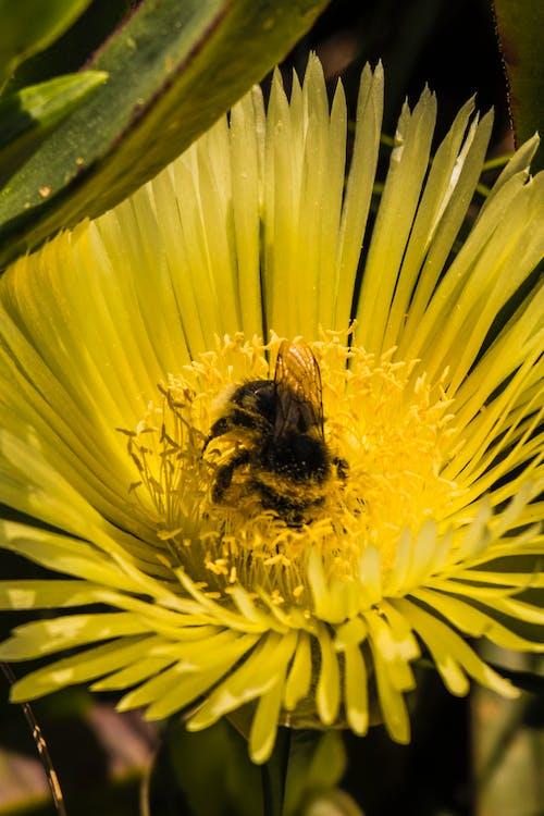 Immagine gratuita di #flower #polen #bee #macro #natura #primavera #sun