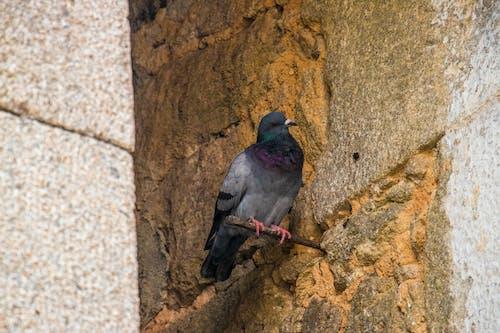 Immagine gratuita di #pidgen #wall #old #clay #nature #shadows