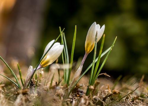 Gratis lagerfoto af fantastisk, forårsblomst, forårsblomster, moder natur