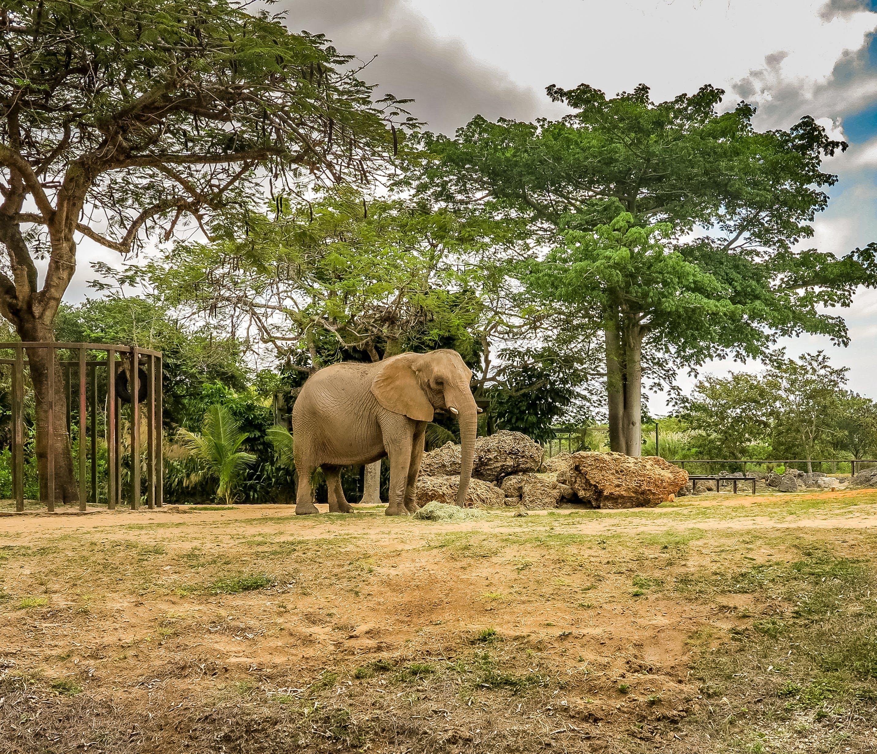 Gratis lagerfoto af elefant, fantastisk, florida, miami