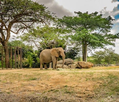 Základová fotografie zdarma na téma divoké zvíře, Florida, Miami, miami zoo