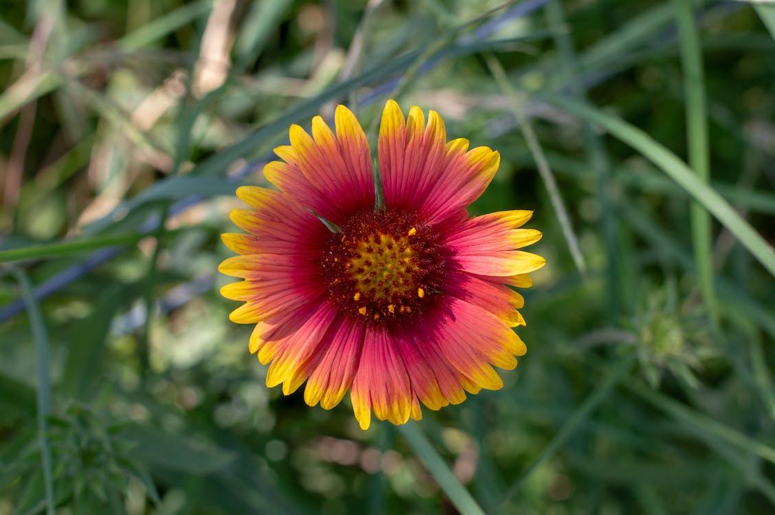 krásny kvet, kvet, nádherné kvety