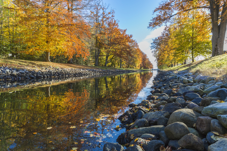 ağaçlar, akarsu, doğa, HD duvar kağıdı içeren Ücretsiz stok fotoğraf