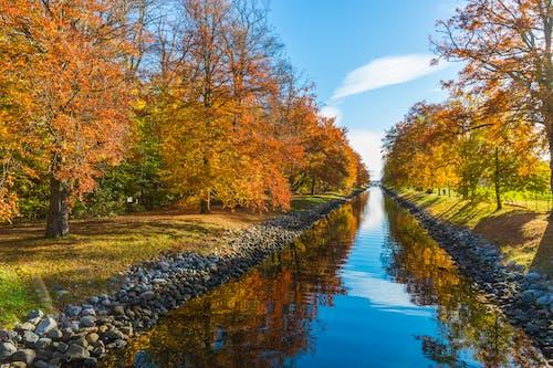 Gratis stockfoto met bomen, kanaal, landschap, mooi uitzicht