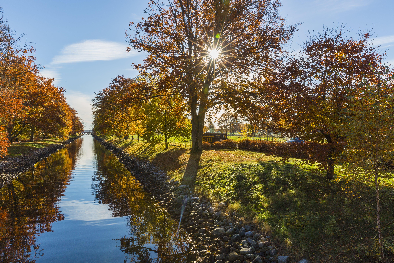 Бесплатное стоковое фото с ветви, вода, деревья, живописный