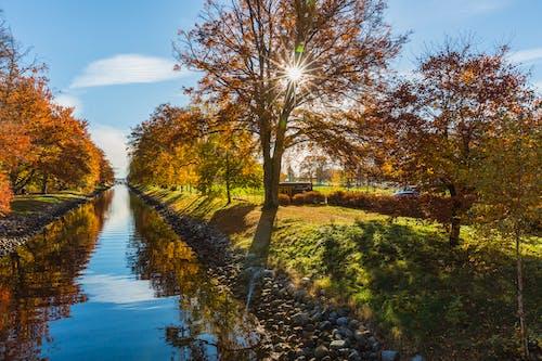 Gratis stockfoto met bomen, h2o, kanaal, landschap