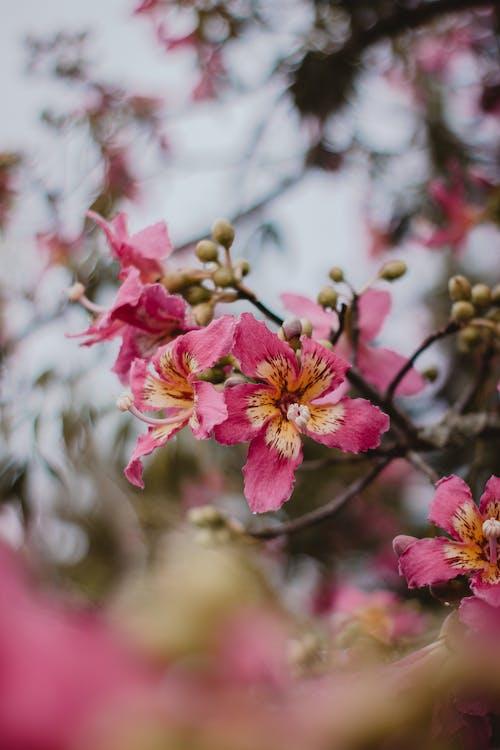 Бесплатное стоковое фото с бутоны, ветвь, глубина резкости, дерево