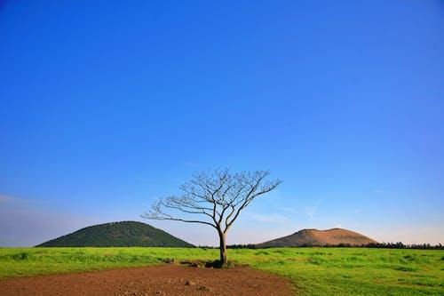 açık hava, ağaç, alan, arazi içeren Ücretsiz stok fotoğraf