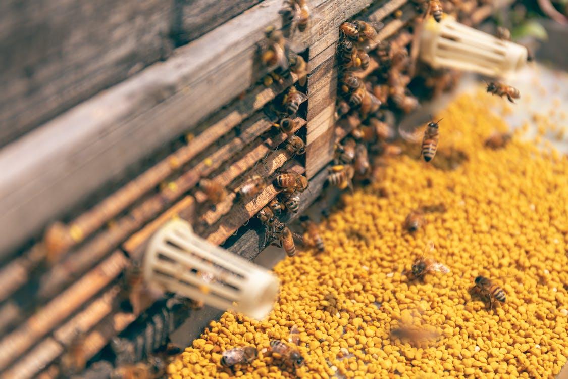 昆蟲, 蜂窩, 蜂蜜