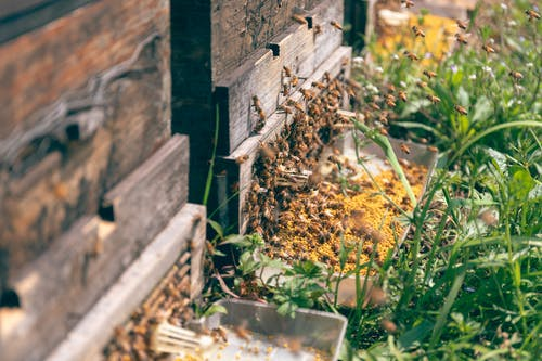 Free stock photo of apiary, bee, honey, pollen