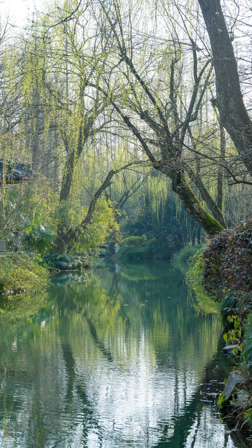 Free stock photo of calm waters, fairy-tale, greenness, lake