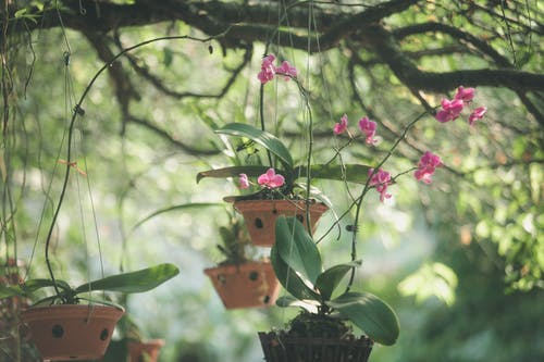 ぶら下がったピンクの花びらの花
