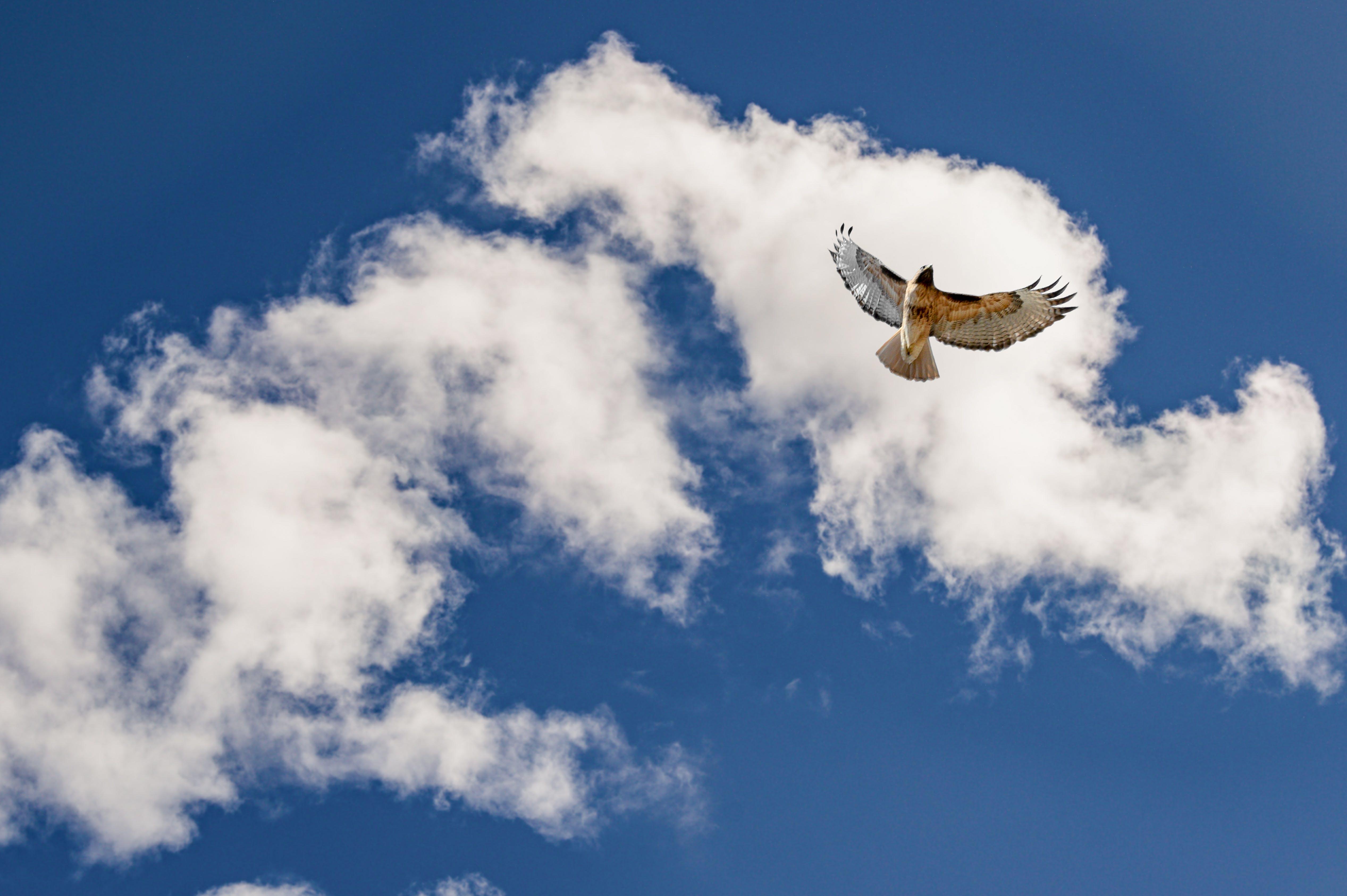 Základová fotografie zdarma na téma létání, modrá obloha, mraky, obloha