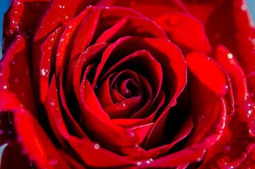 Бесплатное стоковое фото с #природа, nikon, валентинка, весенние цветы