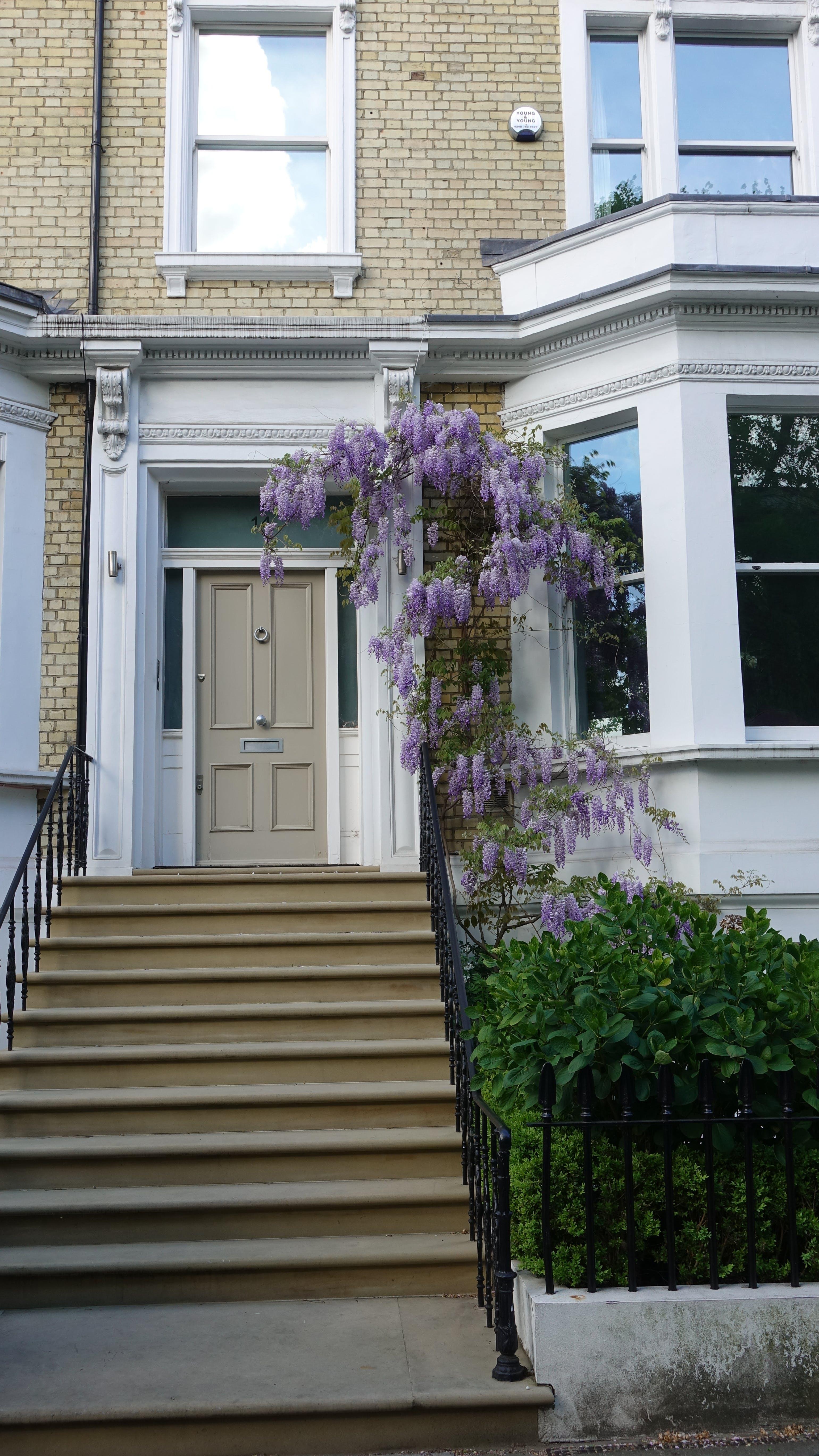 Free stock photo of door, door steps, flowers, front door