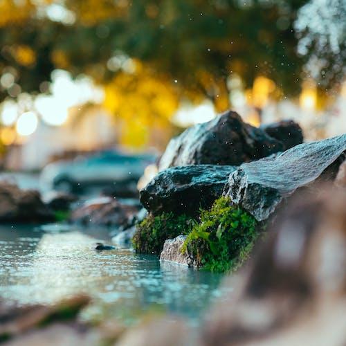 Immagine gratuita di acqua, ambiente, bagnato, bokeh