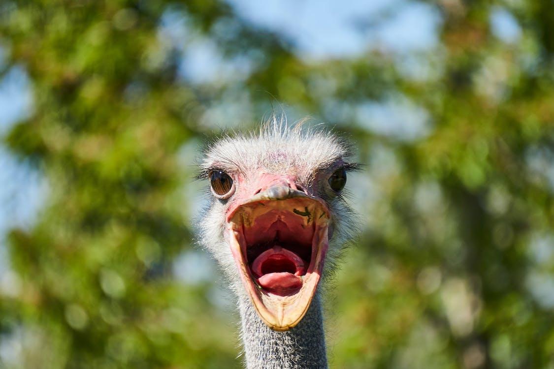 Pássaro Cinza Em Fotografia De Close Up