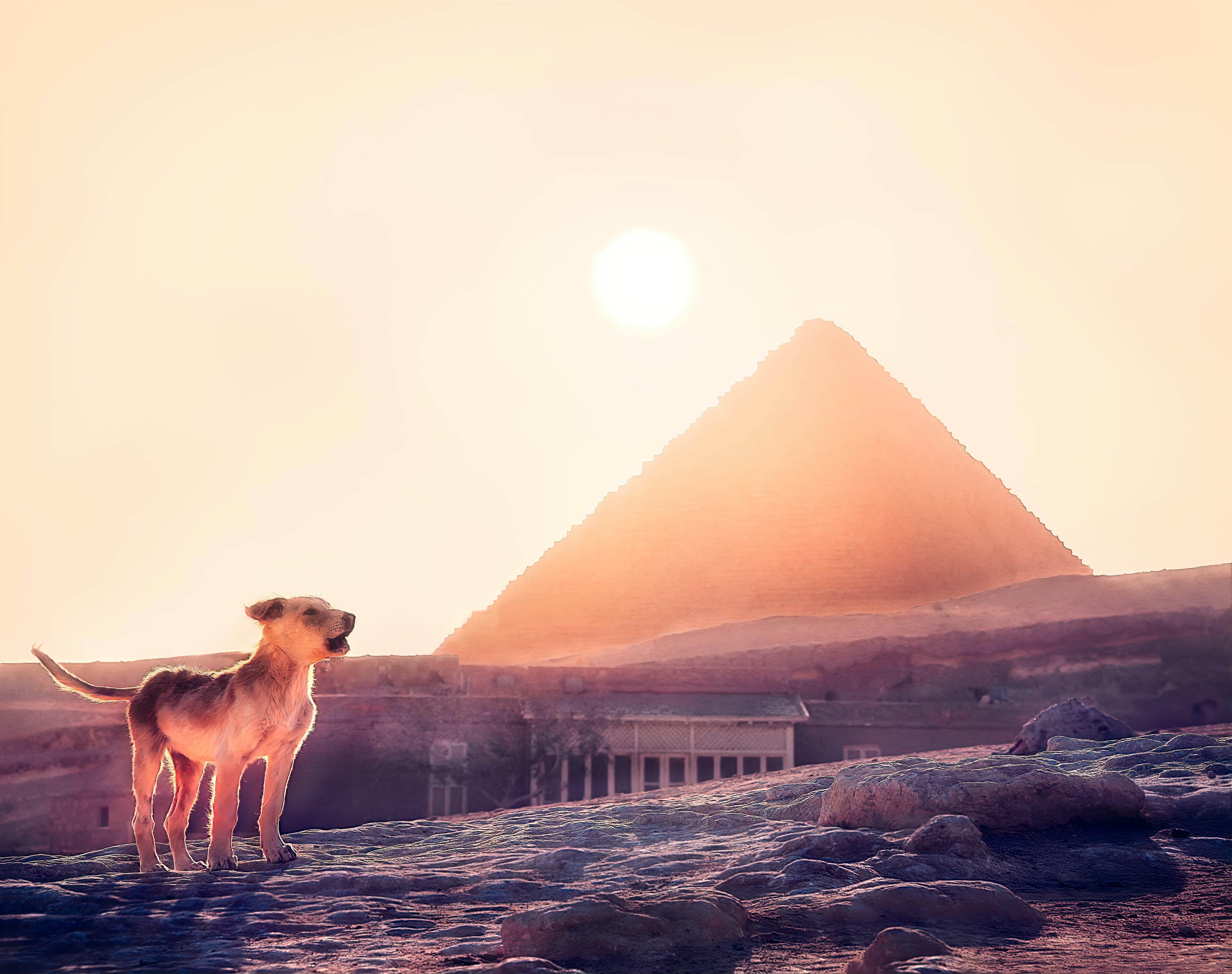 吉萨, 开罗, 日落, 狂吠的狗 的 免费素材照片